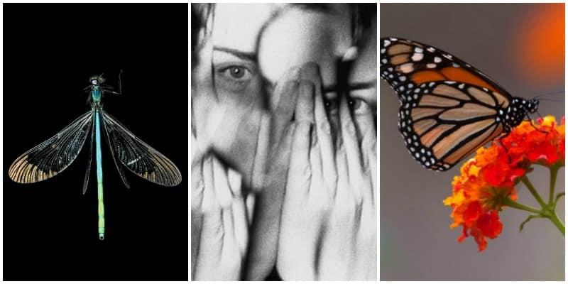 Fobia a los insectos