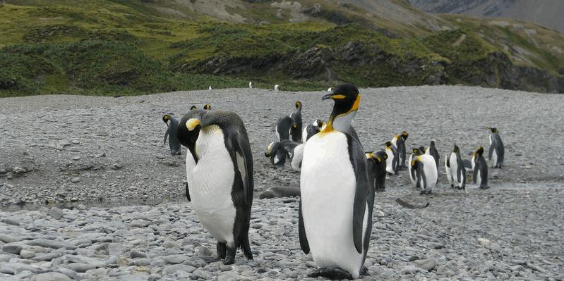 invasión en la antártida