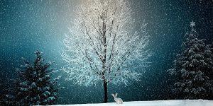 las plagas en invierno