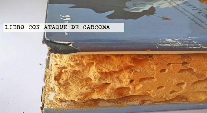 las termitas y la carcoma
