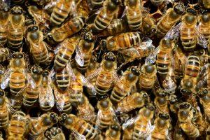 abejas, retirada controlada.