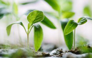 Desarrollo Medioambiental Insec 2020