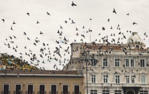controlar aves sin ahuyentadores